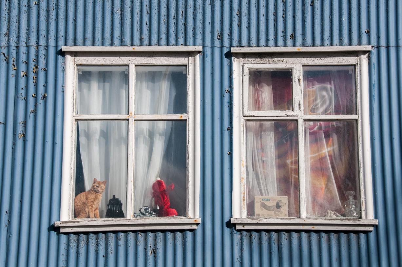Il gatto che abita a Reykjavik