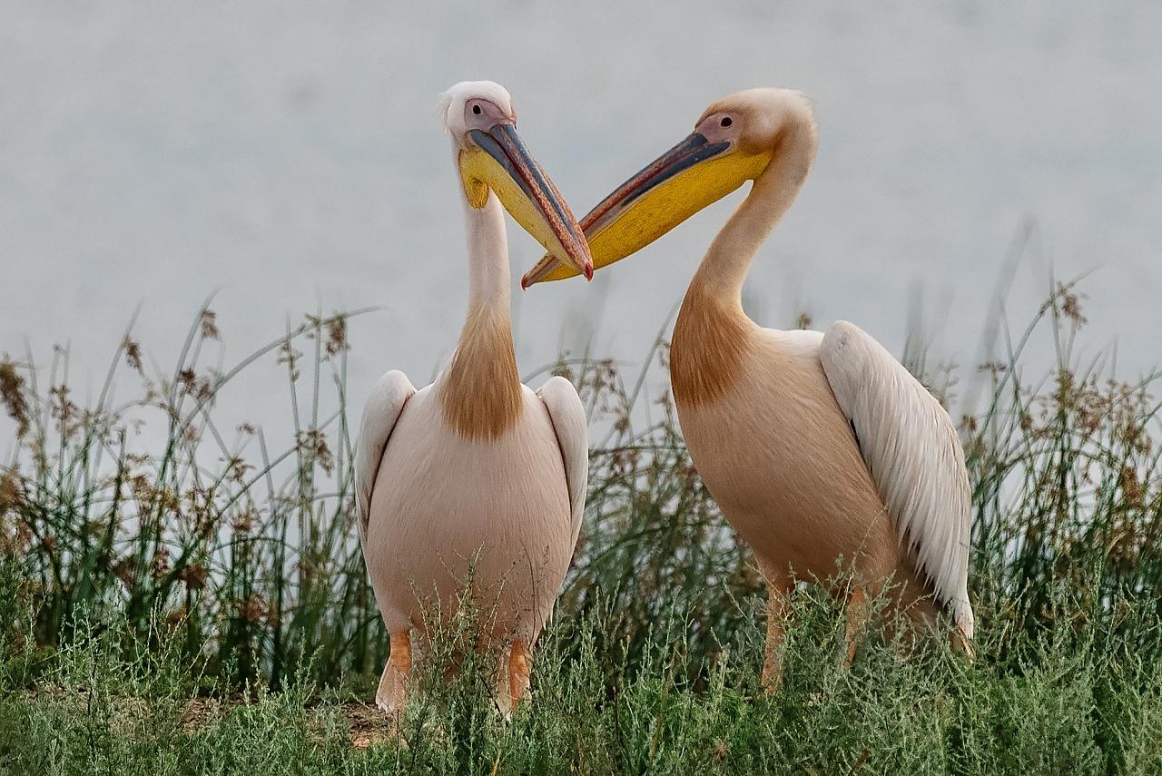 Scegli cosa vuoi vedere : Fauna  ,  Paesaggio  ,  Fotografi in azione Torna indietro