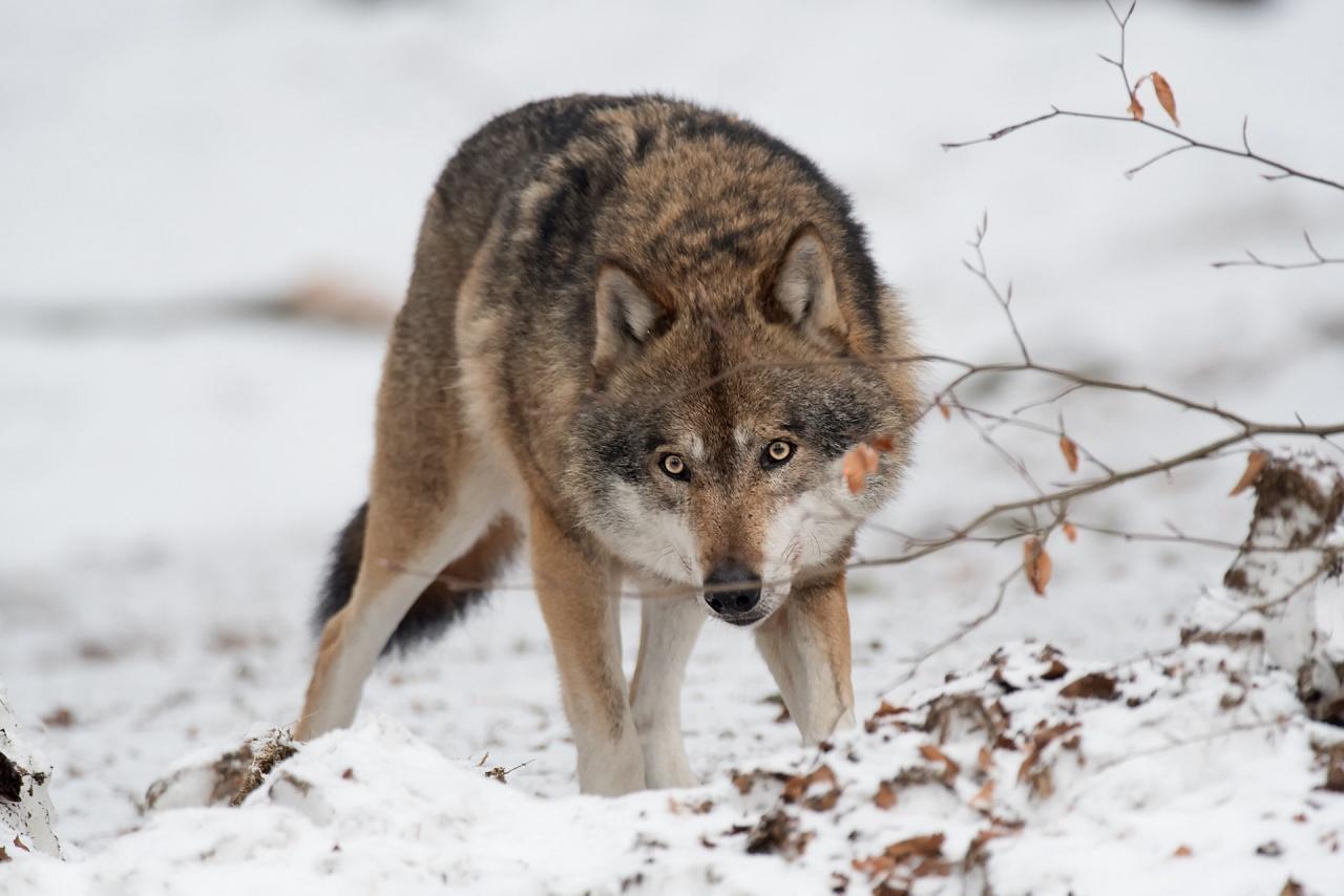 Scegli cosa vuoi vedere : Fauna Fotografi in azione Torna indietro