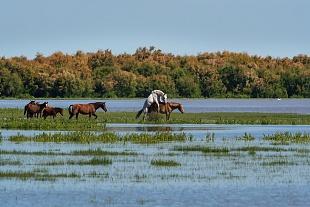 Cavalli, parco Nazionale del Coto Doñana, Andalusia, Spagna - (Hourses,  Doñana National Park, Andalusia, Spain)