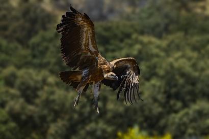 Extremadura 2019 - Fauna