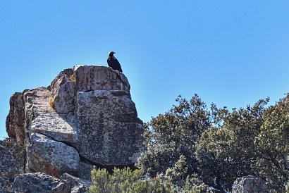 Aquila imperiale - Salto del Gitano - Ho scattato solo per documentare l'evento, ma l'aquila si trovava dall'altro lato del fiume Tago in cima ad uno enorme masso a diverse centinaia di metri di distanza